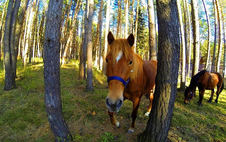 Верховая езда в Яхонты Таруса
